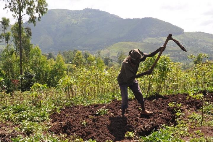 Un fermier éthiopien